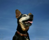 Opłata od psa zlikwidowana