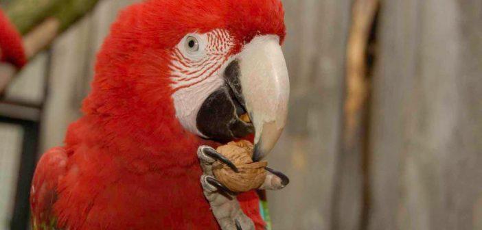 Ptasia grypa z konsekwencjami dla ptactwa w Naszym Zoo