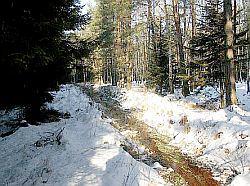 Las w Ruszowie. (Fot. MW)