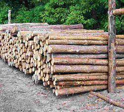 Przygotowane do wywózki drewno.