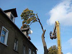 Tak wyglądała wycinka drzew
