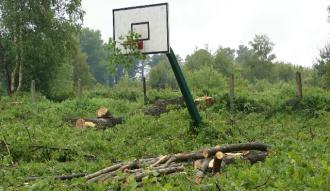 Wycinka drzew na boisku szkolnym
